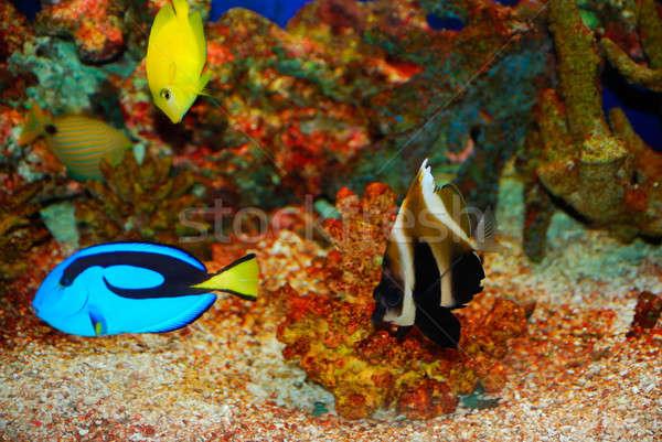 Tropical colorido profundo mar água Foto stock © anbuch