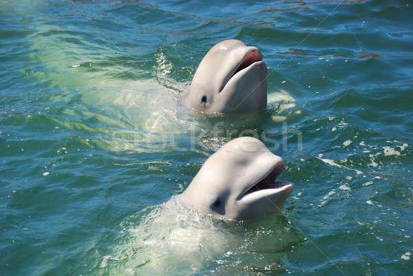 Witte leuk mooie natuur zee schoonheid Stockfoto © anbuch