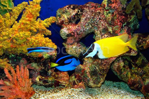 тропические рыбы красивой рыбы глубокий морем воды Сток-фото © anbuch