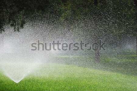 Sprinkling plants Stock photo © anbuch