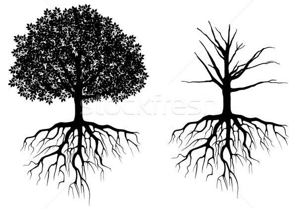 Tree with roots Stock photo © anbuch