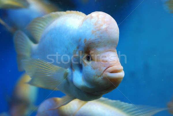 Mooie vis zee natuur Blauw tropische Stockfoto © anbuch