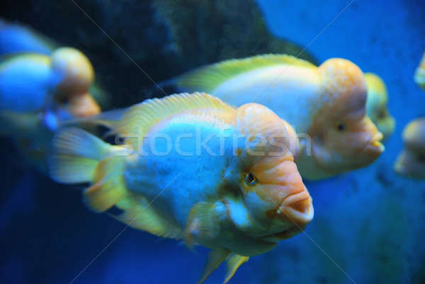 Tropikal derin deniz su balık Stok fotoğraf © anbuch