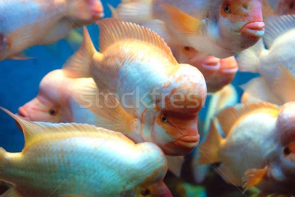 красивой глубокий морем воды рыбы Сток-фото © anbuch