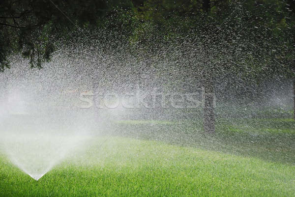 Stock photo: Sprinkling plants