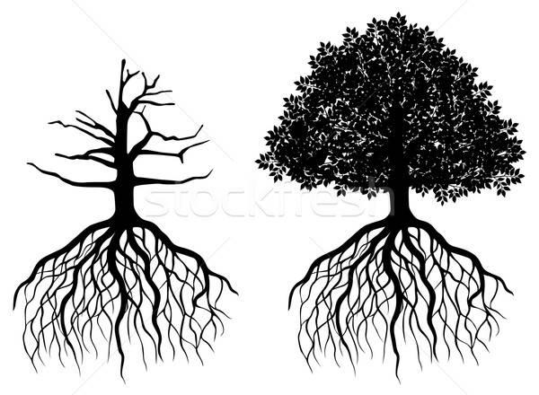 Geïsoleerd boom wortels witte natuur landschap Stockfoto © anbuch