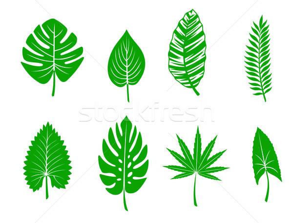 Zöld trópusi levelek szett erdő természet Stock fotó © anbuch