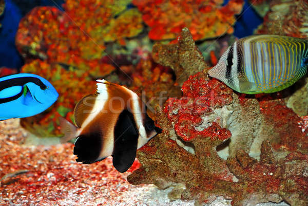 тропические красочный глубокий морем воды Сток-фото © anbuch