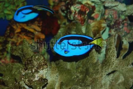 Pesce bella blu profondità mare Foto d'archivio © anbuch
