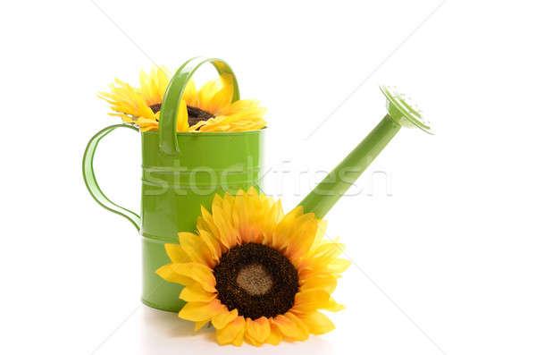 Stock fotó: Locsolókanna · zöld · napraforgók · virág · víz · nyár