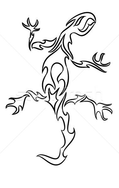 Line Drawing Lizard : Salamander stock photos images and vectors stockfresh