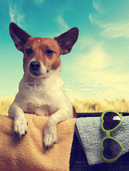 Travel concept with a Jack Russell Terrier Stock photo © andreasberheide