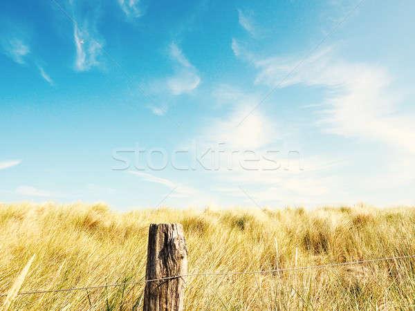 дюна трава Blue Sky синий лет небе Сток-фото © andreasberheide
