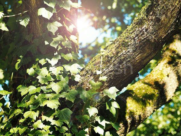 Detail oude boom klimop mos Blauw Stockfoto © andreasberheide
