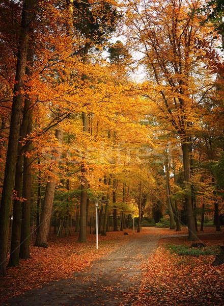 Caminho floresta sazonal natureza fundo Foto stock © andreasberheide