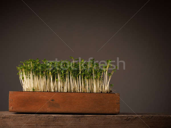 Organic cress in a wooden box Stock photo © andreasberheide
