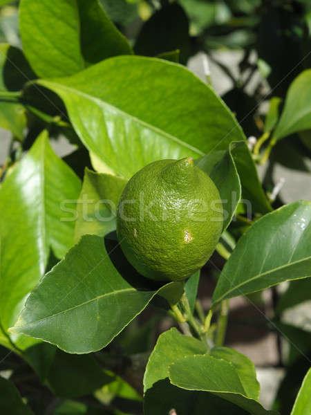 Friss zöld citrom gyümölcs közelkép lövés Stock fotó © andreasberheide