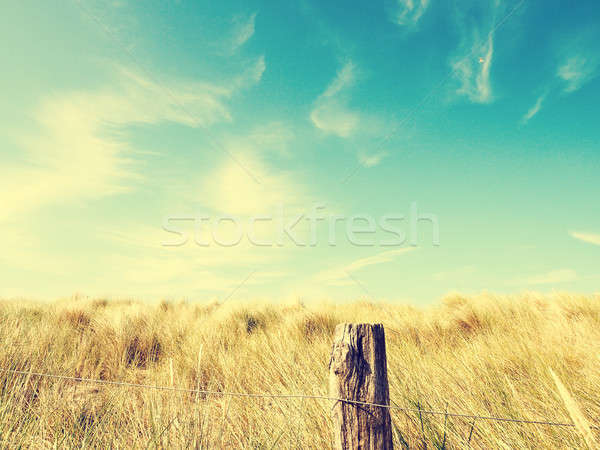 Stock photo: Dune grass with a blue summer sky