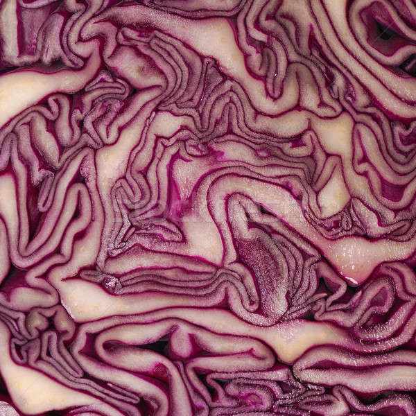 Red cabbage background Stock photo © andreasberheide
