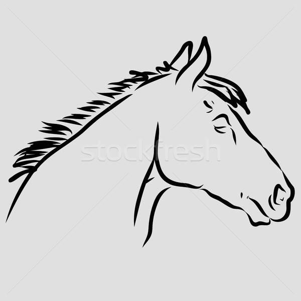 Fej ló kézzel rajzolt vonal rajz művészet Stock fotó © andreasberheide
