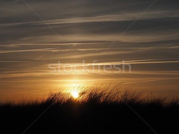 Golden sundown with dune grass Stock photo © andreasberheide