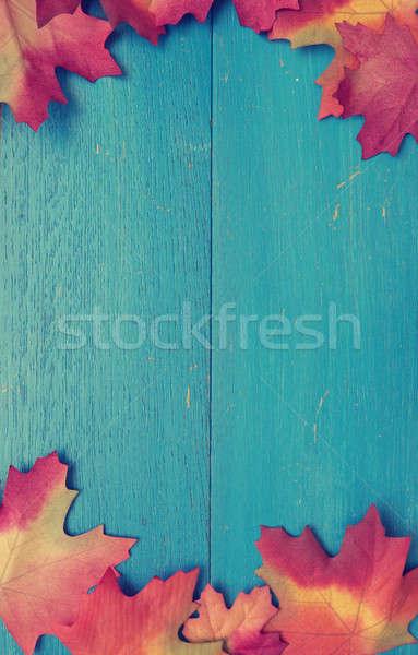 Kék fa piros levelek viharvert szezonális Stock fotó © andreasberheide