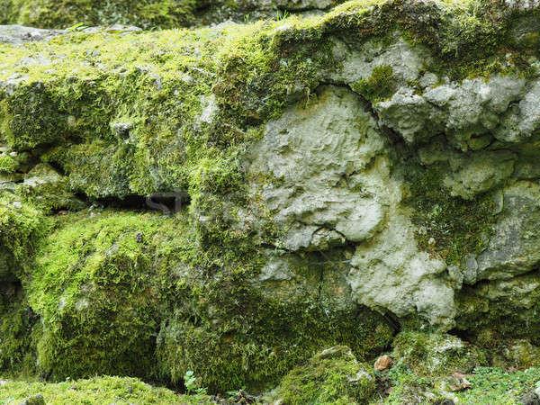 Starych skał mech naturalnych tekstury drewna Zdjęcia stock © andreasberheide