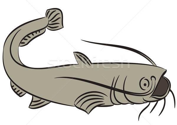 Catfish illustration on white Stock photo © andreasberheide