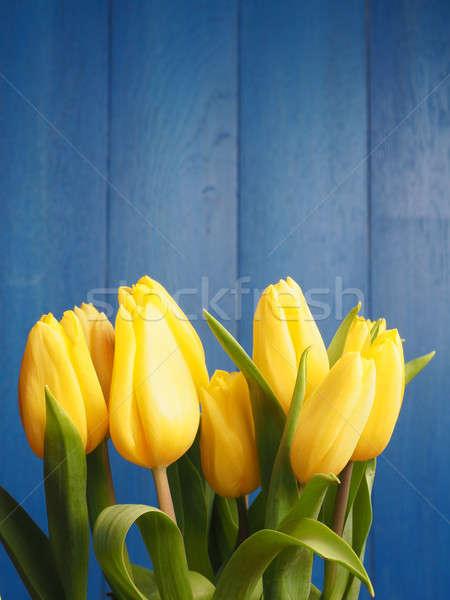 Sarı lale güzel mavi ahşap Stok fotoğraf © andreasberheide