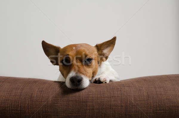 Джек-Рассел терьер подушкой собака счастливым фон пространстве Сток-фото © andreasberheide