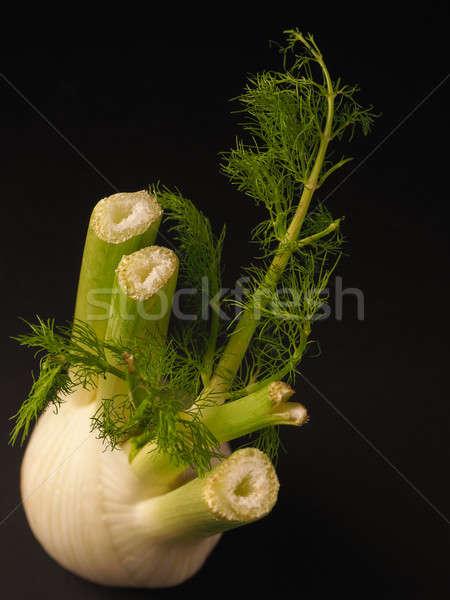 Fresh fennel on a dark background Stock photo © andreasberheide