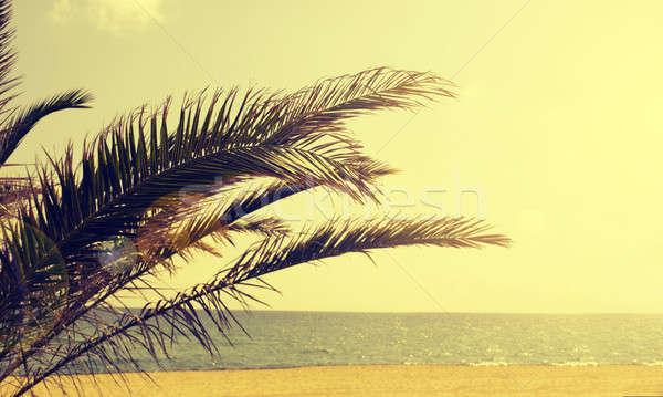 Pálmafa nyár tengerpart retro film becsillanás Stock fotó © andreasberheide