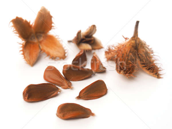 European beech nuts on white Stock photo © andreasberheide