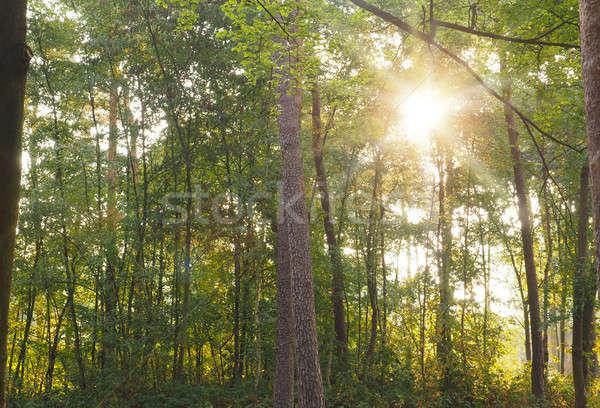 Vert forêt soleil poutre vieux naturelles Photo stock © andreasberheide