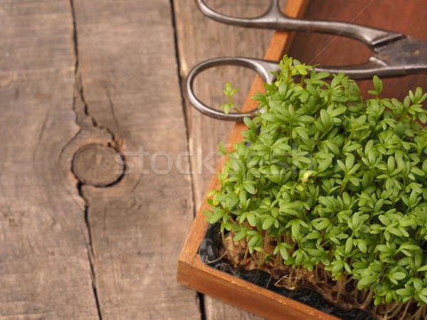 Fresh organic cress Stock photo © andreasberheide