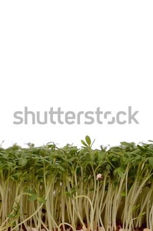 Green cress Stock photo © andreasberheide