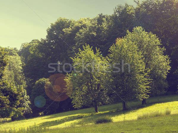 Natural landscape scene Stock photo © andreasberheide