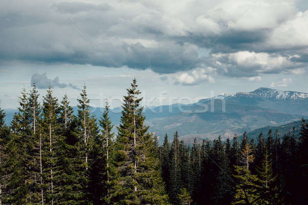 landscape in mountains Carpathians Ukraine Stock photo © andreonegin