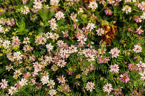 Primavera flor silvestre pradera flores silvestres jardín fondo Foto stock © andreonegin