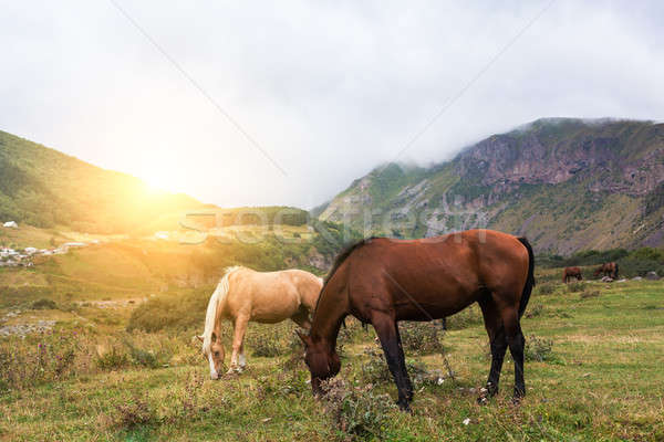 Mountain landscape with grazing horses Stock photo © andreonegin