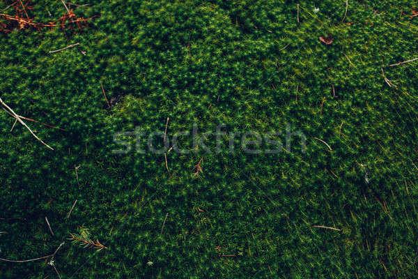 Természetes zöld növényvilág absztrakt fény terv Stock fotó © andreonegin