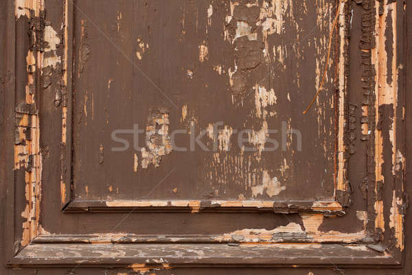 Textura edad árbol pared Foto stock © andreonegin