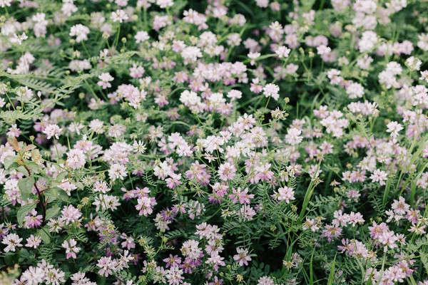 Primavera prado wildflower jardim fundo Foto stock © andreonegin