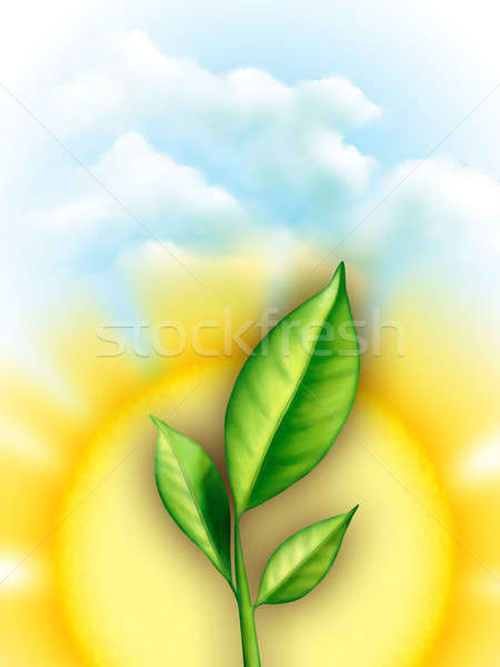 Leaves and sun Stock photo © Andreus
