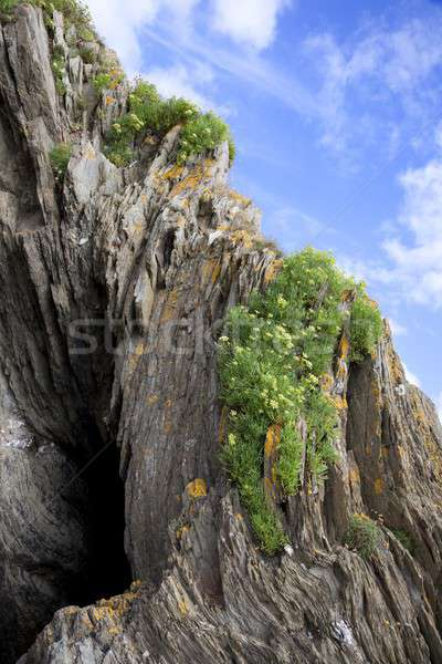 Rock crescita spiaggia cornwall Inghilterra fuoco Foto d'archivio © andrewroland