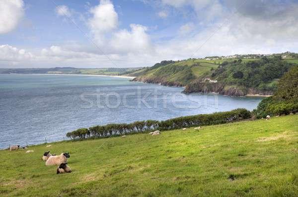 мнение овец весны пейзаж лет Сток-фото © andrewroland