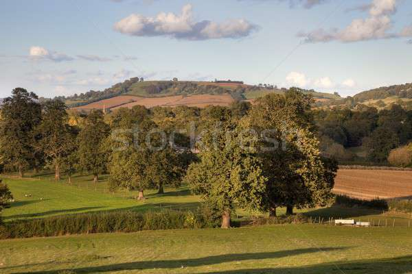 Rural England at sunset Stock photo © andrewroland