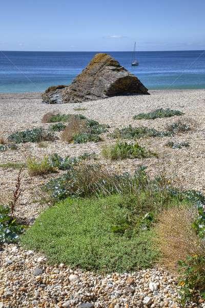 Корнуолл Англии морем растущий Сток-фото © andrewroland