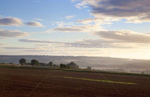 Ploughed field, Cotswolds Stock photo © andrewroland