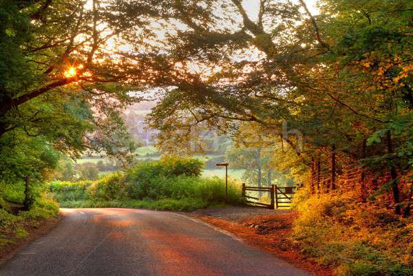 Wooded English country lane at sunset Stock photo © andrewroland